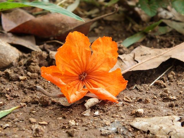 oranžový květ